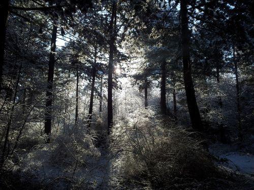 kraštovaizdis,medžiai,sniegas,gamta,miškas,žiemos peizažas,olandų kraštovaizdis