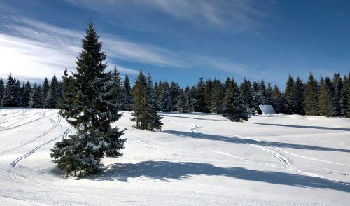 landscape winter forest