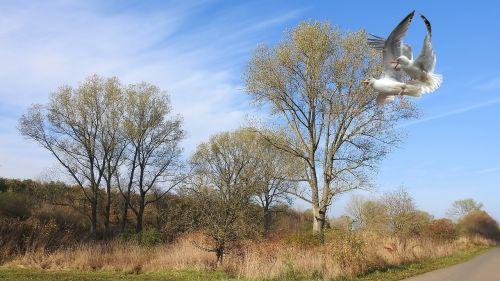 landscape trees birds