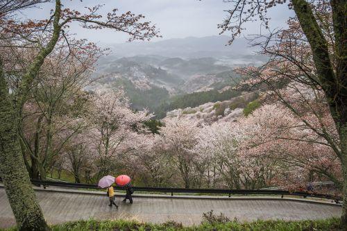 landscape japan nara prefecture