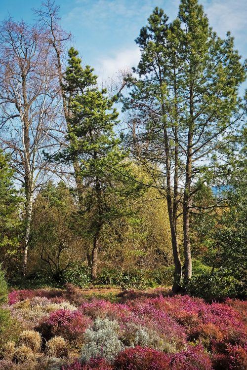 landscape spring heide