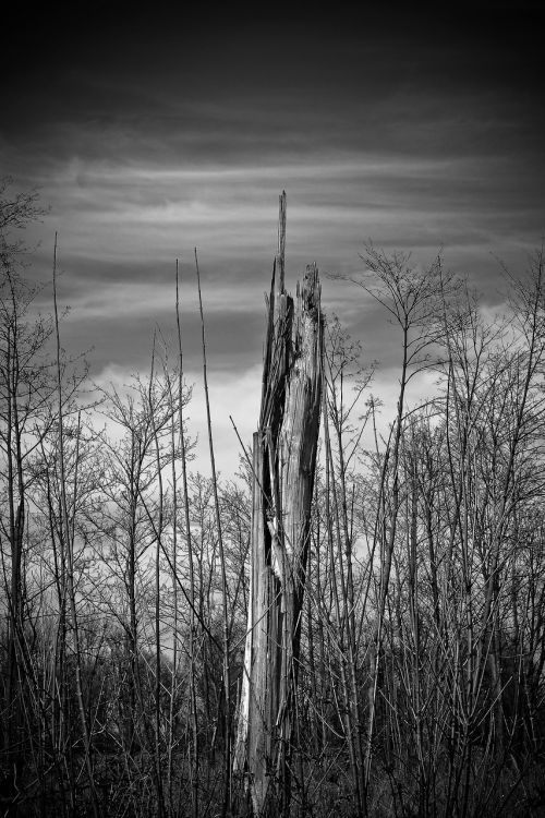 landscape meadowlands trees