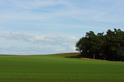 landscape forest meadow