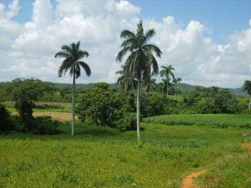 landscape cuba vinales