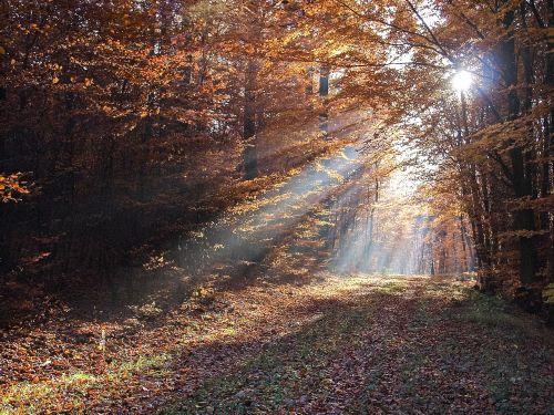 landscape forest sunbeam