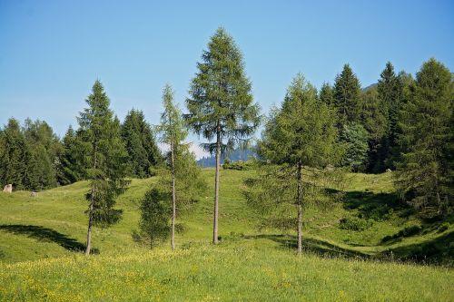 landscape trees ways