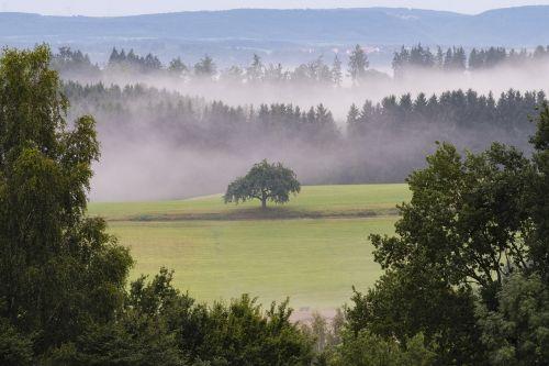 landscape forest fog