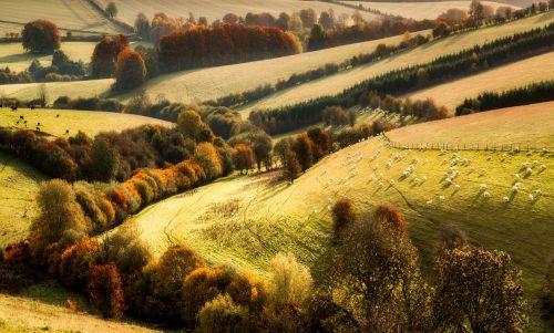 landscape fall autumn