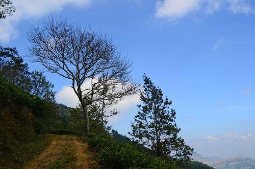 kraštovaizdis,medis,miręs medis,džiovintas medis,mėlynas dangus,Šri Lanka,loolecondera,ceilonas