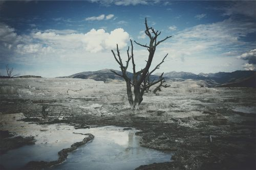 landscape tree branches