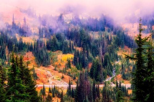 landscape fog mist