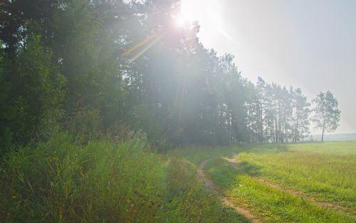 landscape summer morning