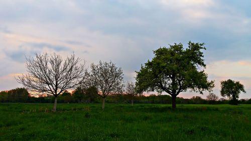 kraštovaizdis,pavasaris,gamta,laukas,grazus krastovaizdis,žalias,pieva,dangus