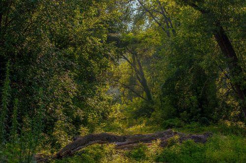 landscape balance beam forest