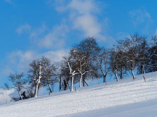 landscape,winters,hill,snow,field,cold,winter landscape,snowy landscape,bare shaft