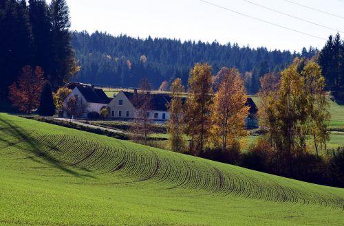 kraštovaizdis,medis,aukso ruduo,šviesa,rudens nuotaika,nuotaika