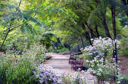 landscape arboretum nature