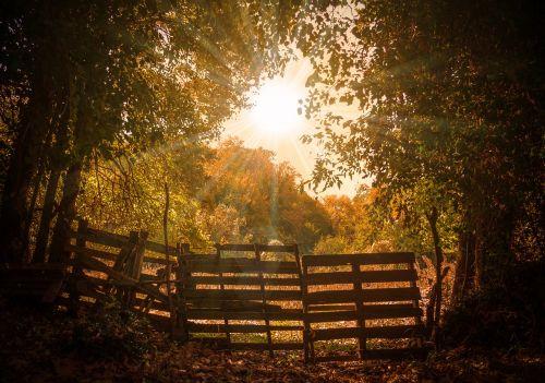 landscape autumn sun trees