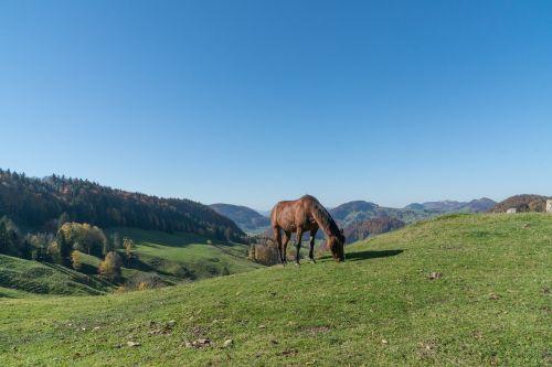 kraštovaizdis,arklys,ganykla,ganyti