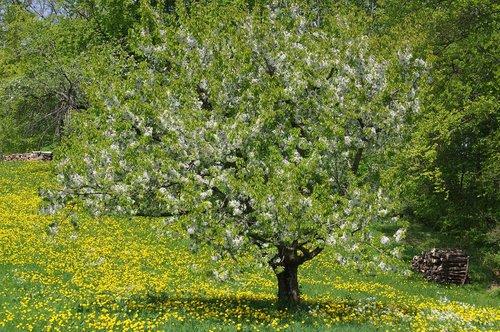landscape  tree  nature