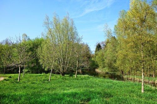 landscape  field  trees