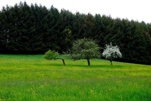 landscape  grass  meadow