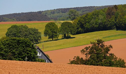 landscape  trees  meadow