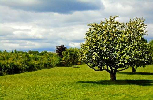 landscape  scene  country