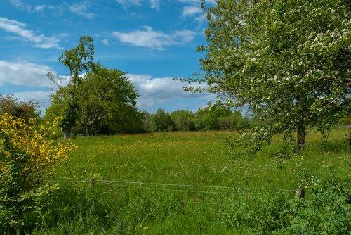 landscape  prairie  spring