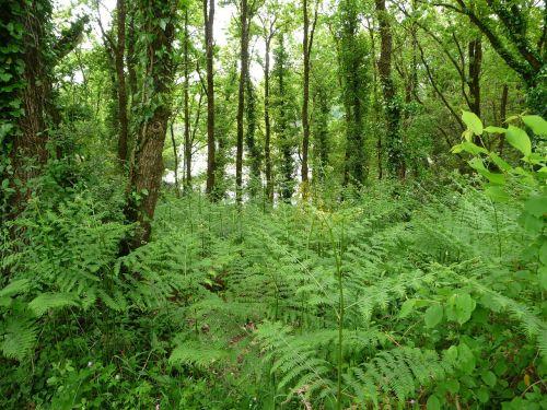 landscape forest vendéenne