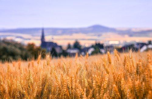 landscape  nature  cornfield