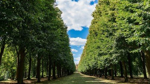 landscape  avenue  nature