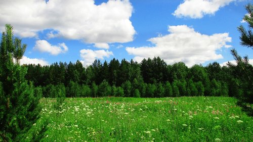 landscape  field  forest