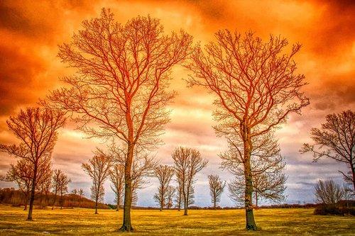 landscape  nature  trees