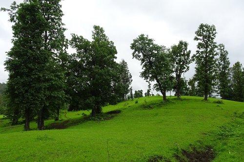 landscape  nature  green