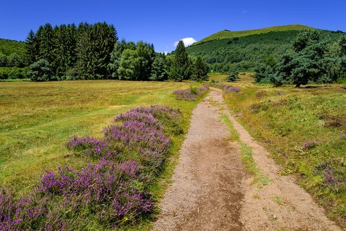 landscape  countryside  path