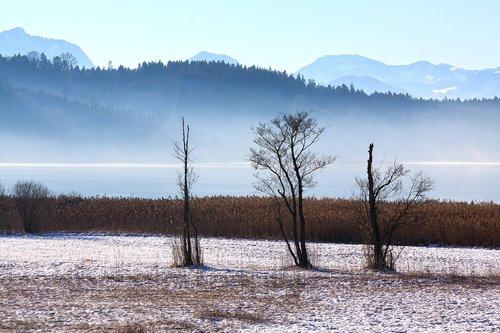 landscape  winter  trees