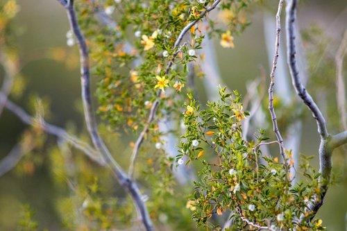landscape  yellow  nature