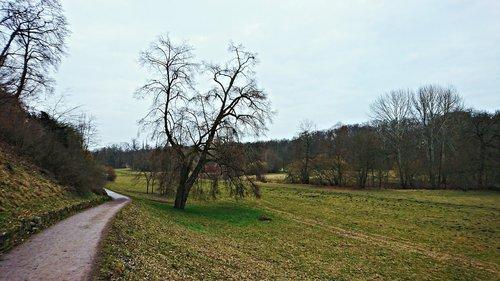 landscape  tree  trail