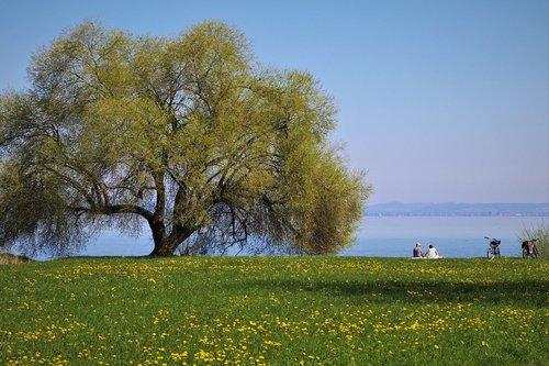 landscape  meadows  picnic