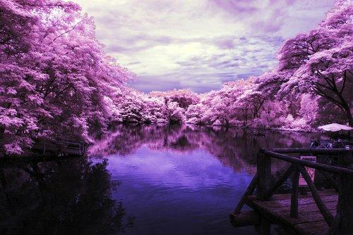 landscape  lake  purple trees