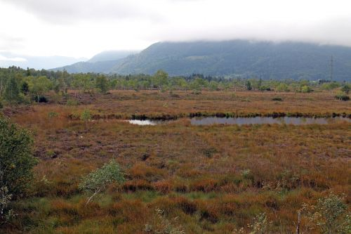 landscape heide moor