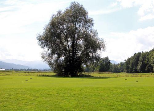 landscape chiemgau tree