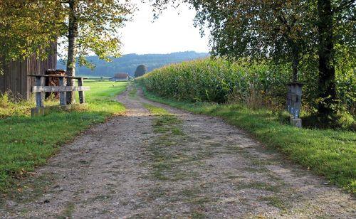 landscape cornfield field