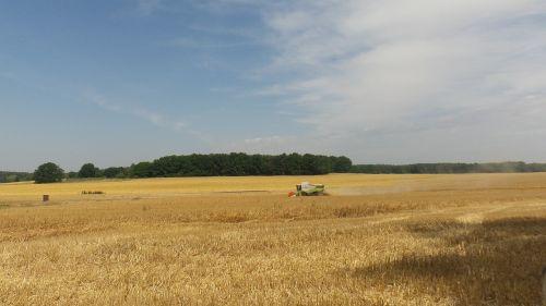 landscape harvest field