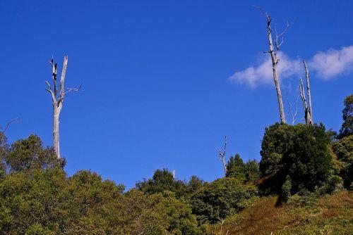 kraštovaizdis,medžiai,mirę medžiai,žalias,australia
