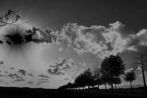 landscape trees rays