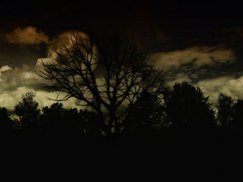 landscape night dark