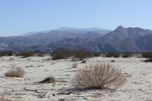 landscape desert palm springs