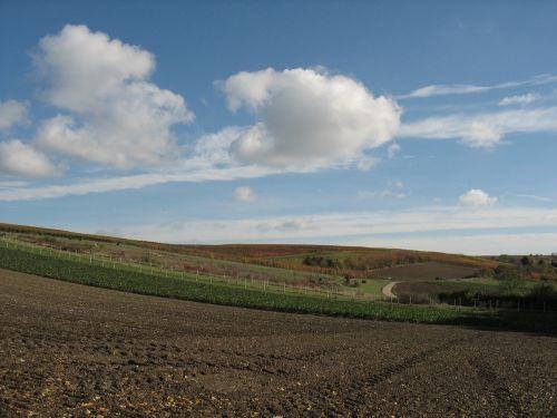 landscape vines vineyard
